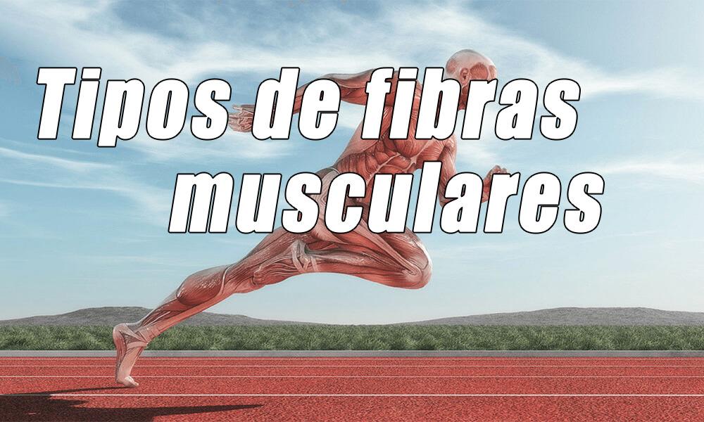 Tipos de fibras musculares de contracción rápida y lenta | Correr