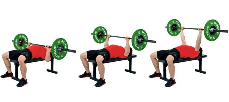 También excelente para el volumen de tus músculos